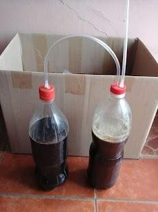cara menggunakan air kencing kelinci untuk tanaman padi