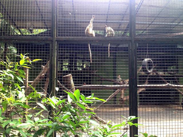 monyet zoo negara
