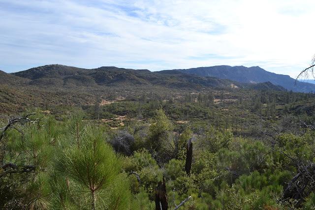 Mission Pine Basin