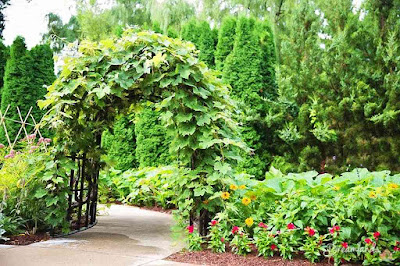 Fun and Easy Garden Arbor Ideas and Plans