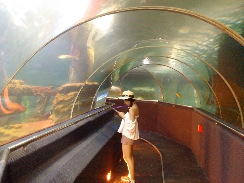 Hình ảnh khu thủy cung của Vin