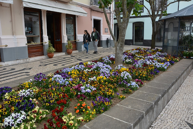 Largo de Matriz flowers