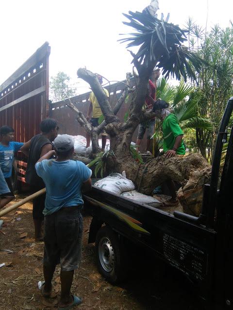 Sewa Truk Jakarta ke Bangka Belitung