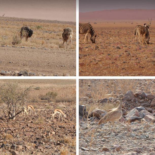 animali nella Namib Rand Nature Reserve