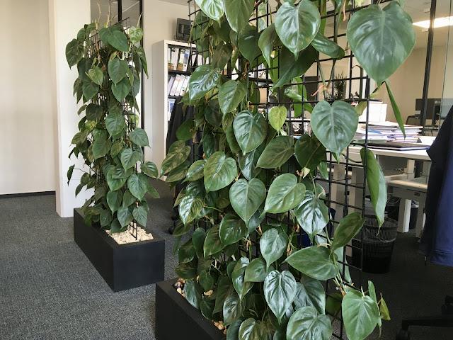 Plantenbakken op poten voor buiten met klimrek op terras of potten in metaal hout cortenstaal kunststof plastic pvc steen beton urban riet bohemian jungle