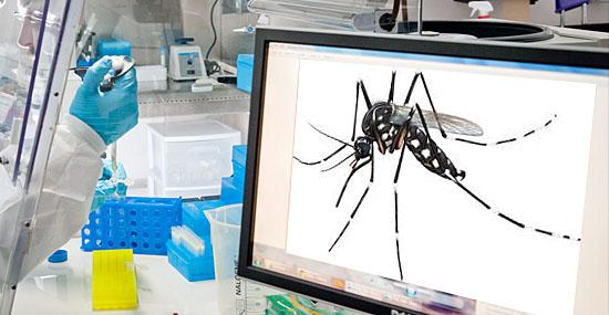 Mosquitos sabem quando alguém tenta matá-los e se lembram disso - afirmam pesquisadores