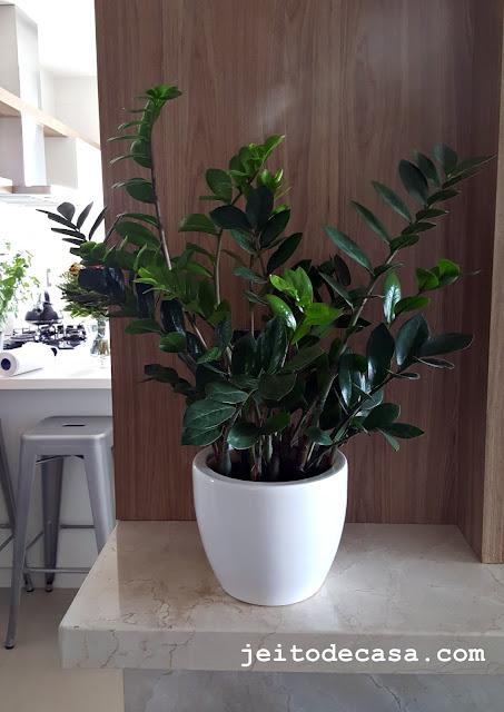 decoração-planta-interiores-zamioculca