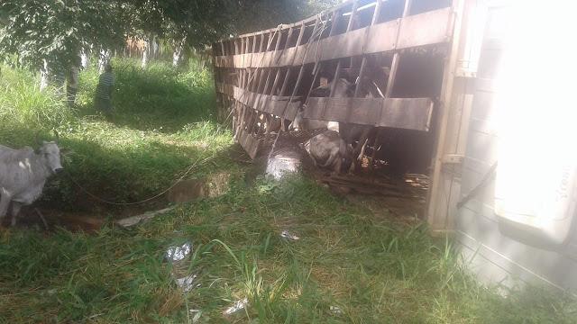 Caminhão boiadeiro tomba na BR-135, entre Bacabeira e Santa Rita