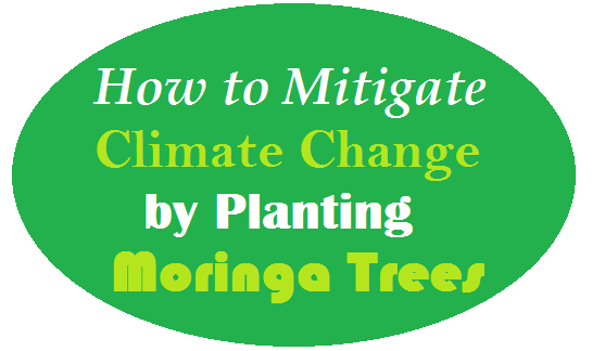 How to Mitigate Climate Change by Planting Moringa Trees