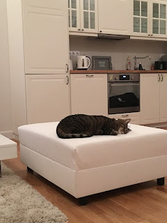 mallory update cats wanderlust budapest hungary cat sofa