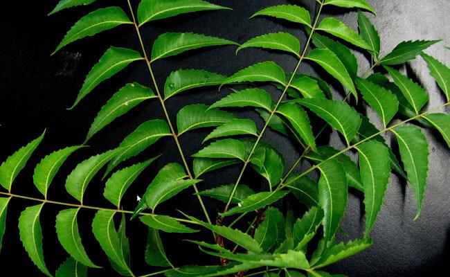 get rid of dandruff neem