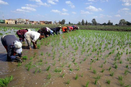 Etiopía y FAO buscan tácticas para enfrentar cambio climático