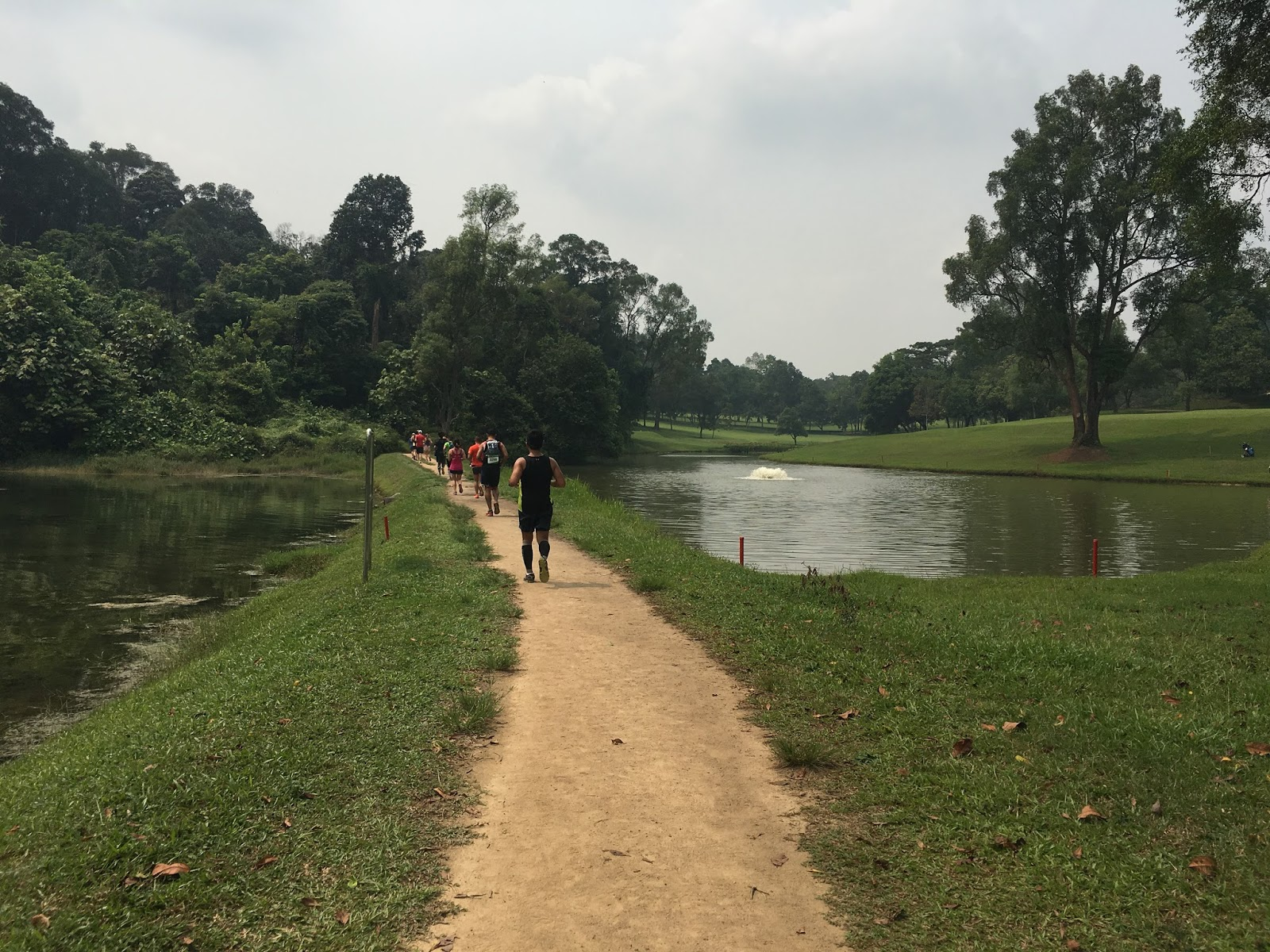 MacRitchie Nature Trail near the Singapore Island Country Club (SICC)