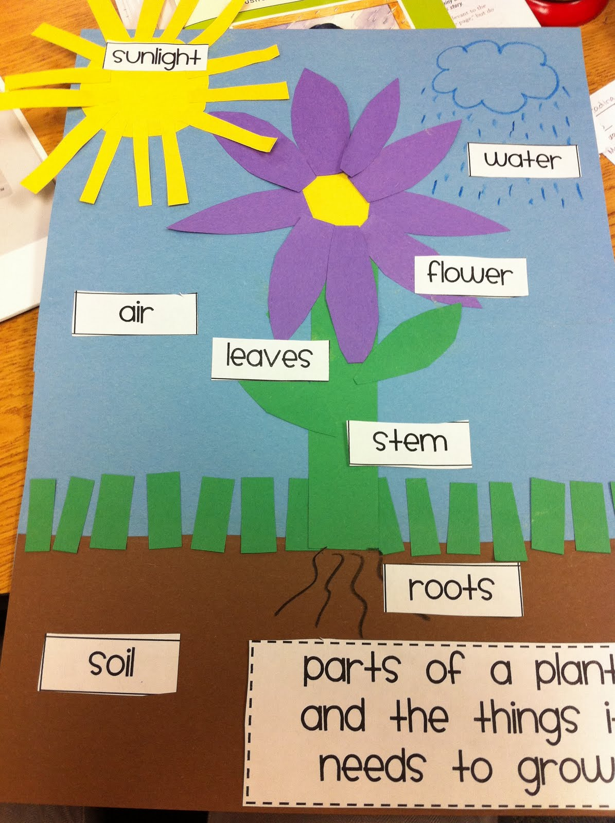 the adventures of a k 1 teacher plants mania. Black Bedroom Furniture Sets. Home Design Ideas