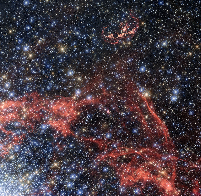 Search for stellar survivor of a supernova explosion