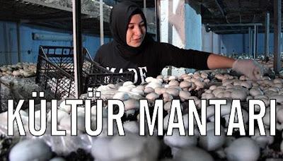 mantar-üretimi