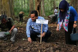 Wabup Blora Arief Rohman Tanam Kelor Di Tegakan Jati Perhutani Kebonharjo