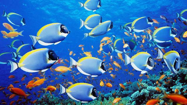 Mengapa Ikan Bisa Bernapas Di Dalam Air?