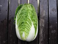 美味しそうな白菜
