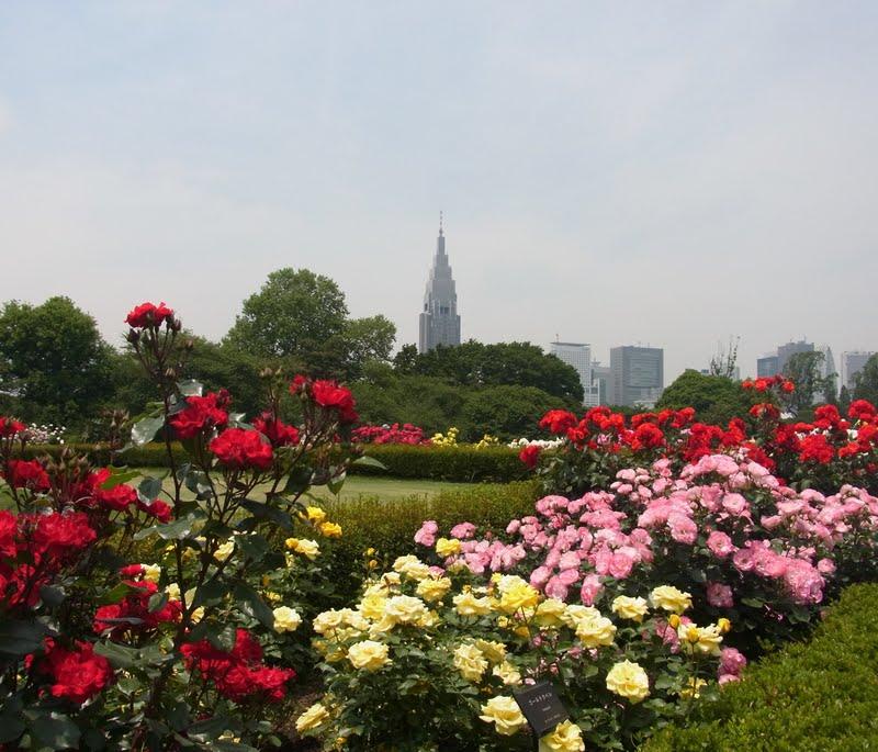 ユメミーの旅日記: バラが満開の新宿御苑