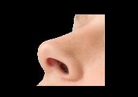 Nostril (lubang hidung)