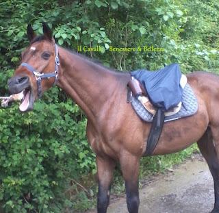 cavallo che sbadiglia