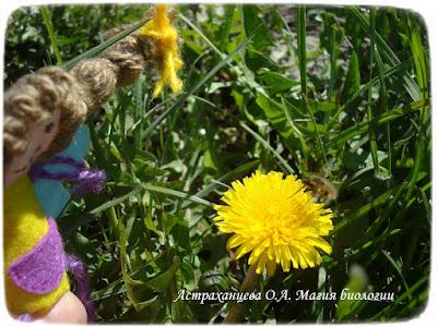 одуванчик, жужжало, феечка, пальчиковая игрушка, фетр, желтый