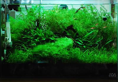 小型水槽 水草レイアウト