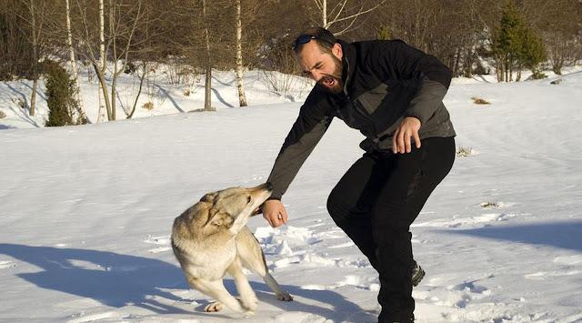 Pertolongan Pertama untuk Korban Digigit Anjing…Yuk Baca Infonya Berikut Ini