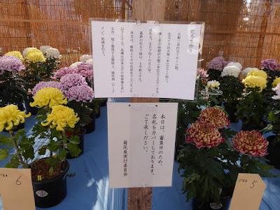 ひらかた菊花展 (ふれあい通り)