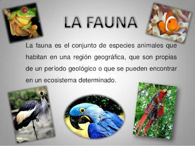 Que es la Fauna