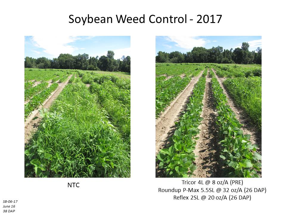 weed management in soybeans Worst weeds in soybeans: herbicide resistance a threat john pocock 1 | jan 30, 2012 weed scientists generally don't agree on the exact ranking of soybean's.