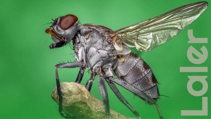 Misteri Sayap Lalat Dan Cara Mengusir Lalat Dari Rumah