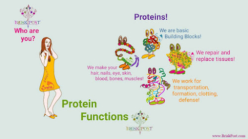 Protein Function