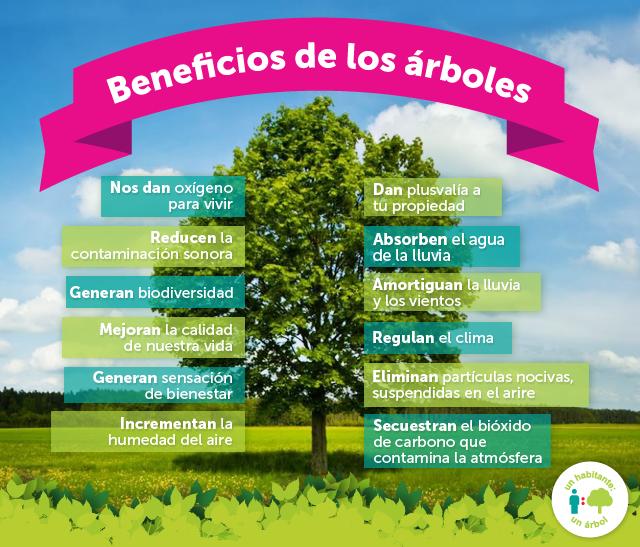 Beneficios de los árboles