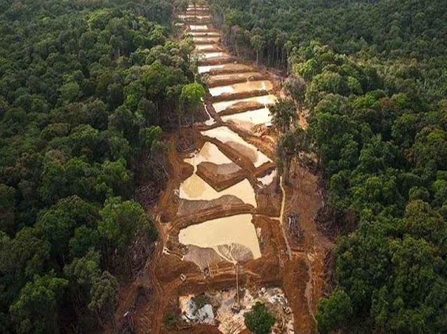Denuncian que ecocidio en el Arco Minero del Orinoco es más grande que Cuba y Panamá