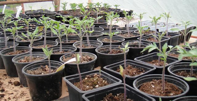 Φυτεύω τα δικά μου φυτά από σπόρο
