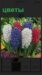 на клумбе растут красивые цветы разного цвета