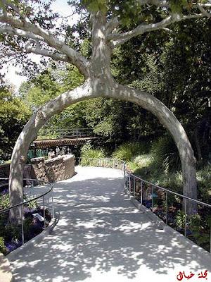 مجموعة من أغرب الاشجار حول العالم tree_2.jpg