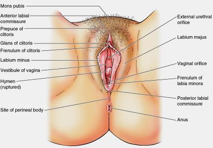 Female erogenous zones diagram you