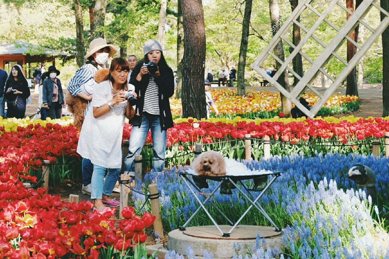 pengalaman ke hitachi seaside park jepang