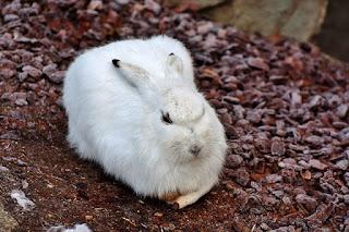 Habitat Kelinci di Dunia