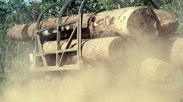 Có ít nhất 75 triệu đôla gỗ được vận chuyển từ Campuchia sang Việt Nam
