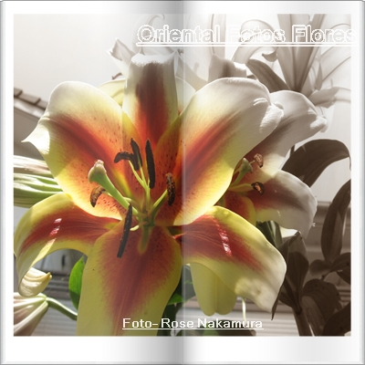 lírios - Oriental Fotos Flores