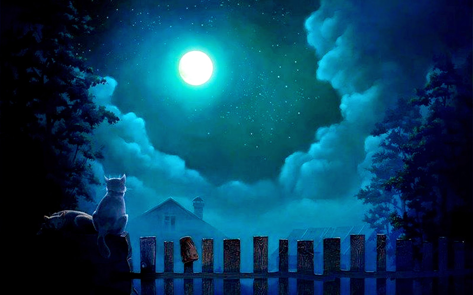 Cat Night Lights Beauty Of Moonlight At Night Sky Near Sea Poetic Nature Images