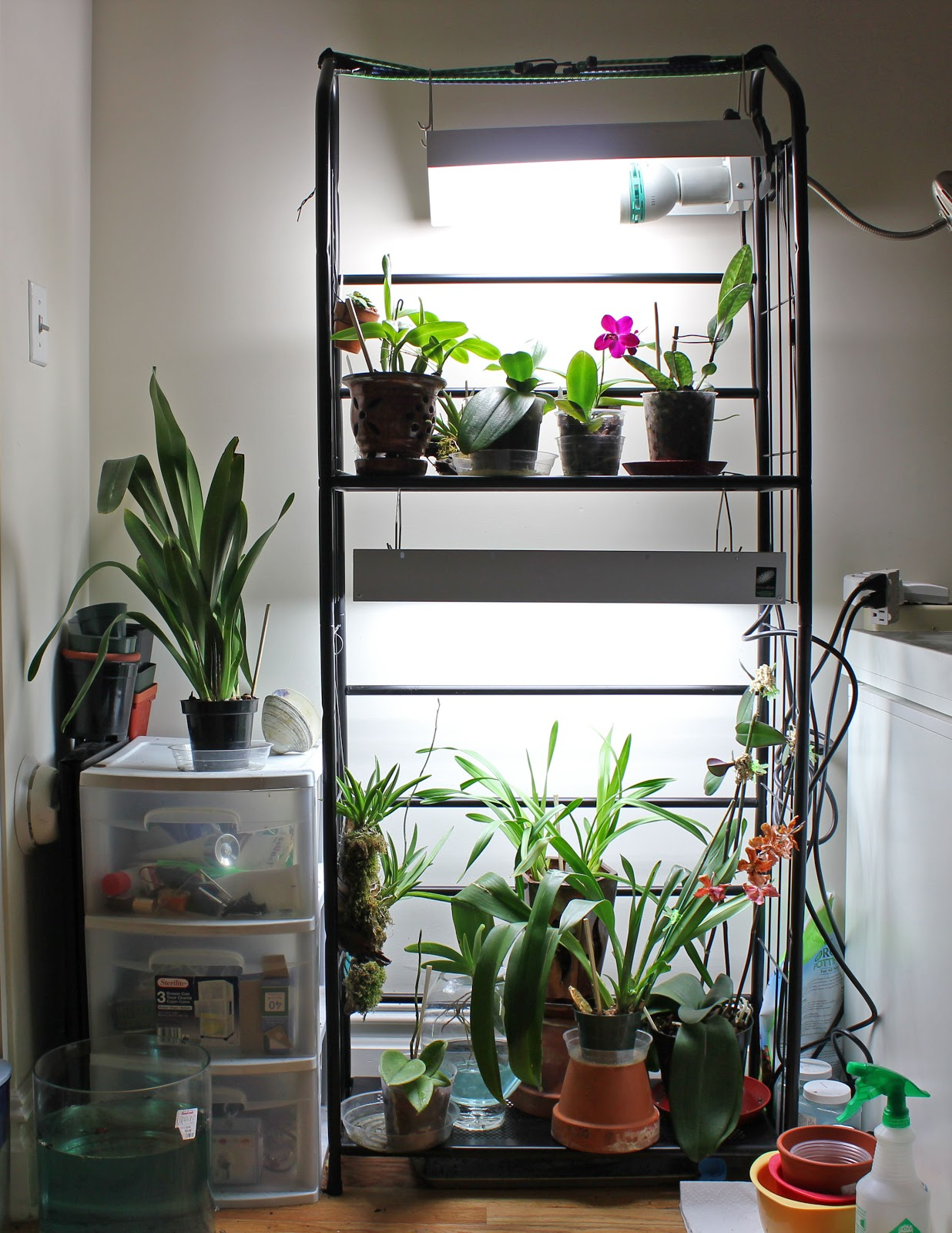 Lighting Upgrade adding a T5 fixture to my growth area & Mariau0027s Orchids: Lighting Upgrade: adding a T5 fixture to my growth area