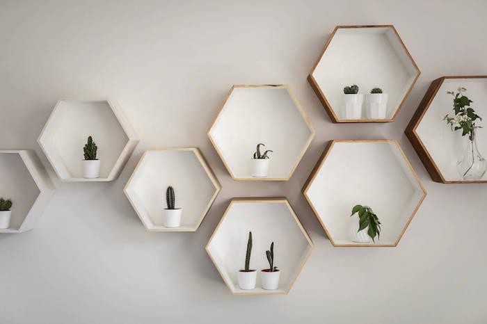 Estantes hexagonales con cactus