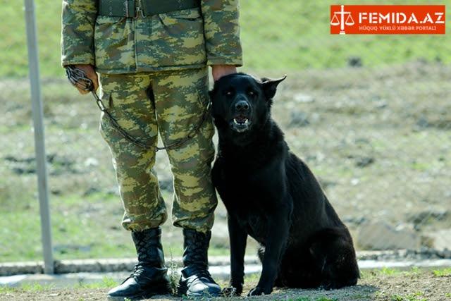 Azerbaiyán enseñará armenio a perros