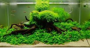 tema aquarium