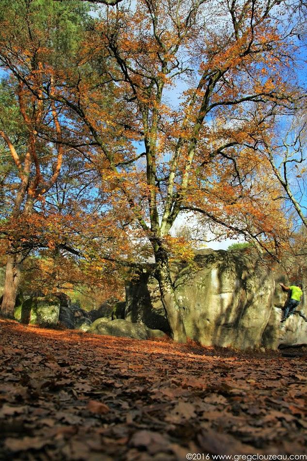 L'angle Incarné, 7B, Bas Cuvier, Fontainebleau.